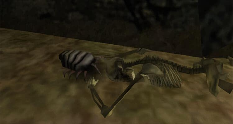 Мясной жук у скелета