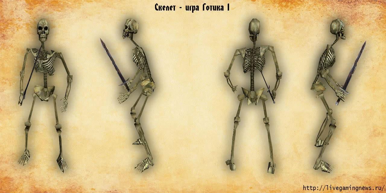 Скелет – низшая форма нежити из игры Готика 1, вид справа, слева, спереди, сзади